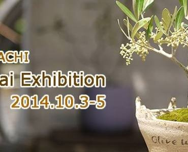 オリーブの盆栽だけを集めた盆栽展、10月3日から神戸で開催