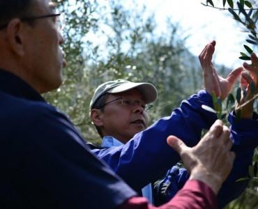 GreeceJapan.com独占インタビュー:「高尾農園のオリーブ畑」-世界が認めた品質の秘密