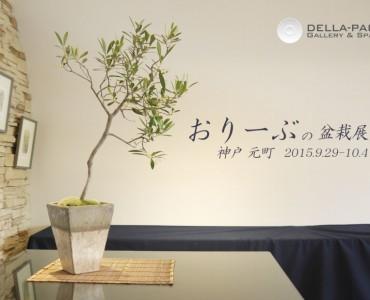 オリーブの盆栽展、9月から神戸・福岡・名古屋・東京で開催
