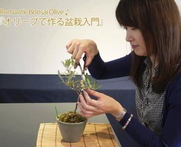 オリーブを使った盆栽作りを学ぶワークショップ、5日(土)東京・兵庫で開催