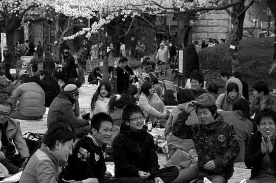 Greecejapan_Introduction_Hanami_in_Tokyo.jpg