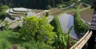 Ένας ορυζώνας στην Ιαπωνία (video)