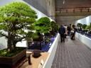 Στην έκθεση Μπονσάι Κοkufu στο Τόκιο