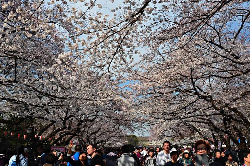 Στο Πάρκο Ουένο στο Τόκιο photo: GreeceJapan.com