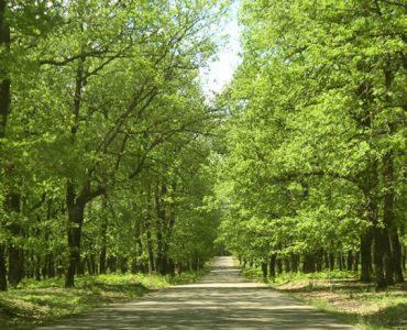 foloi-forest.jpg