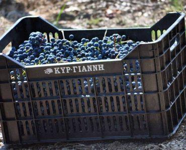 kir-yanni-vineyard.jpg