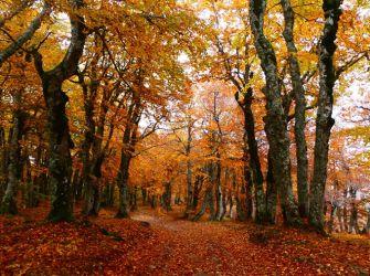 ギリシャは秋だって魅力的!~紅葉の季節に訪れるギリシャ~(photos)