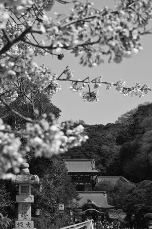 Kamakura-Grigoris Miliaresis