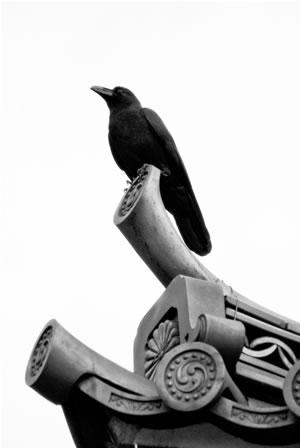 Μου μεγάλο μαύρο πουλί φωτογραφία