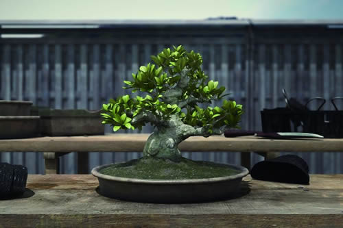 BONSAI still