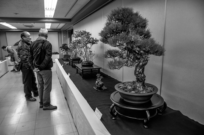 Greecejapan_Bonsai
