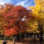 Οι εποχές στο Πανεπιστήμιο του Χοκάιντο