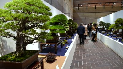1-kokufu_bonsai_018-001.jpg