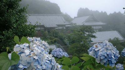 tsuyu-by-fhisa.jpg